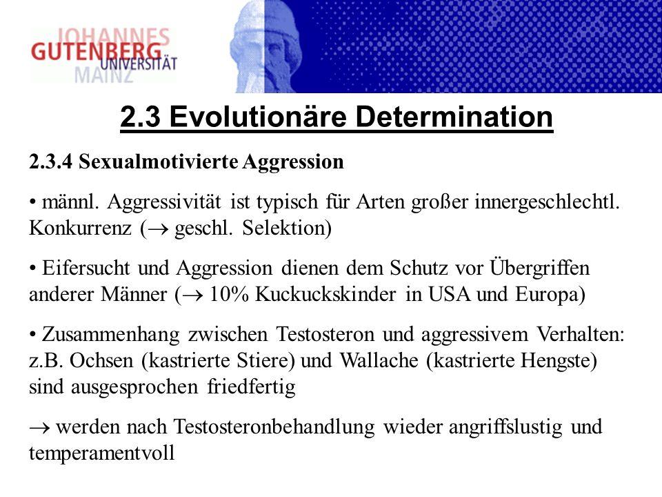 2.3 Evolutionäre Determination 2.3.4 Sexualmotivierte Aggression männl. Aggressivität ist typisch für Arten großer innergeschlechtl. Konkurrenz ( gesc