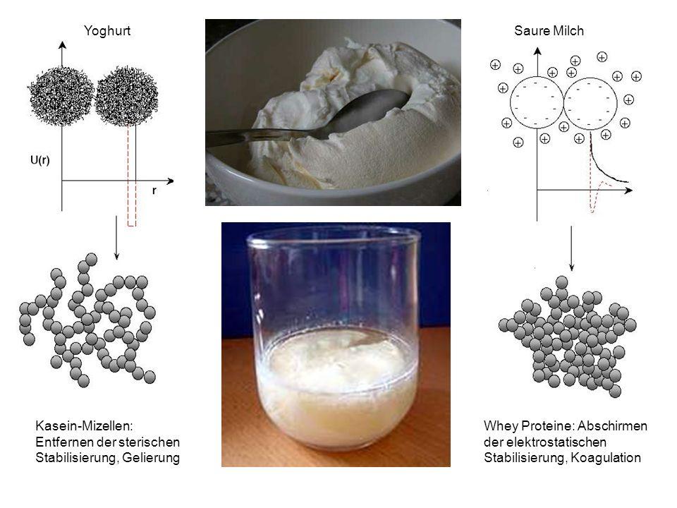 Yoghurt Saure Milch Kasein-Mizellen: Entfernen der sterischen Stabilisierung, Gelierung Whey Proteine: Abschirmen der elektrostatischen Stabilisierung, Koagulation