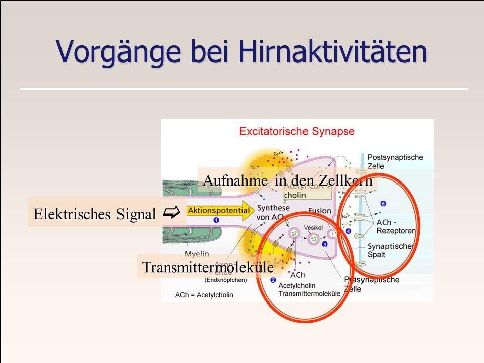 Vorgänge bei Hirnaktivitäten Elektrisches Signal Elektrisches Signal Aufnahme in den Zellkern Transmittermoleküle