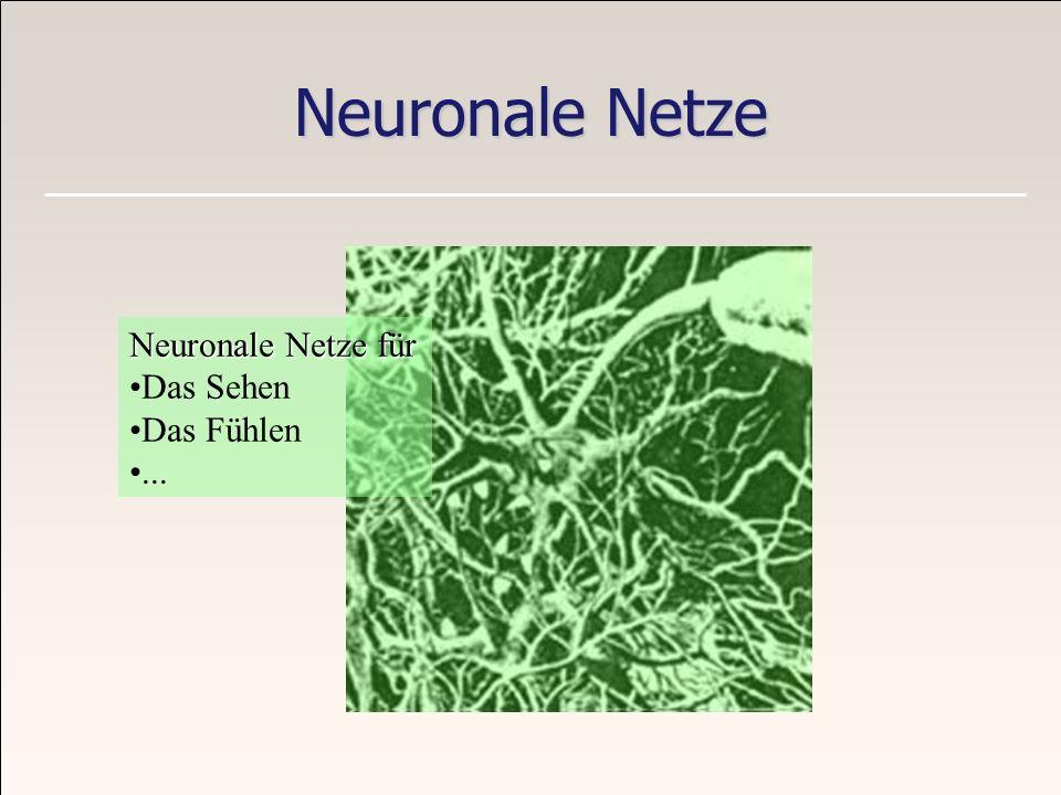 Neuronale Netze Neuronale Netze für Das Sehen Das Fühlen...