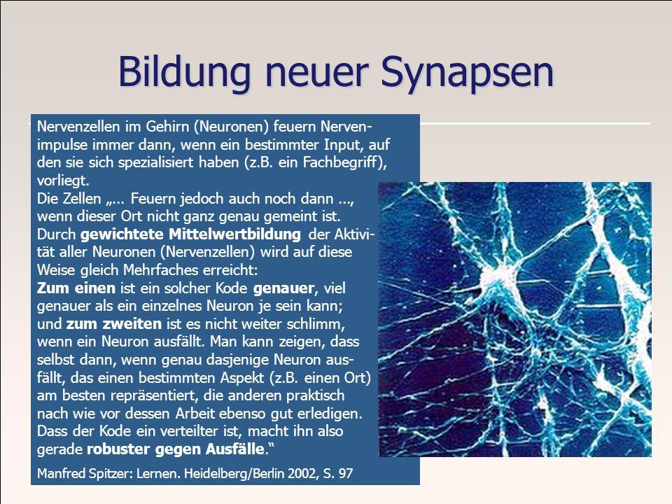 Bildung neuer Synapsen Nervenzellen im Gehirn (Neuronen) feuern Nerven- impulse immer dann, wenn ein bestimmter Input, auf den sie sich spezialisiert
