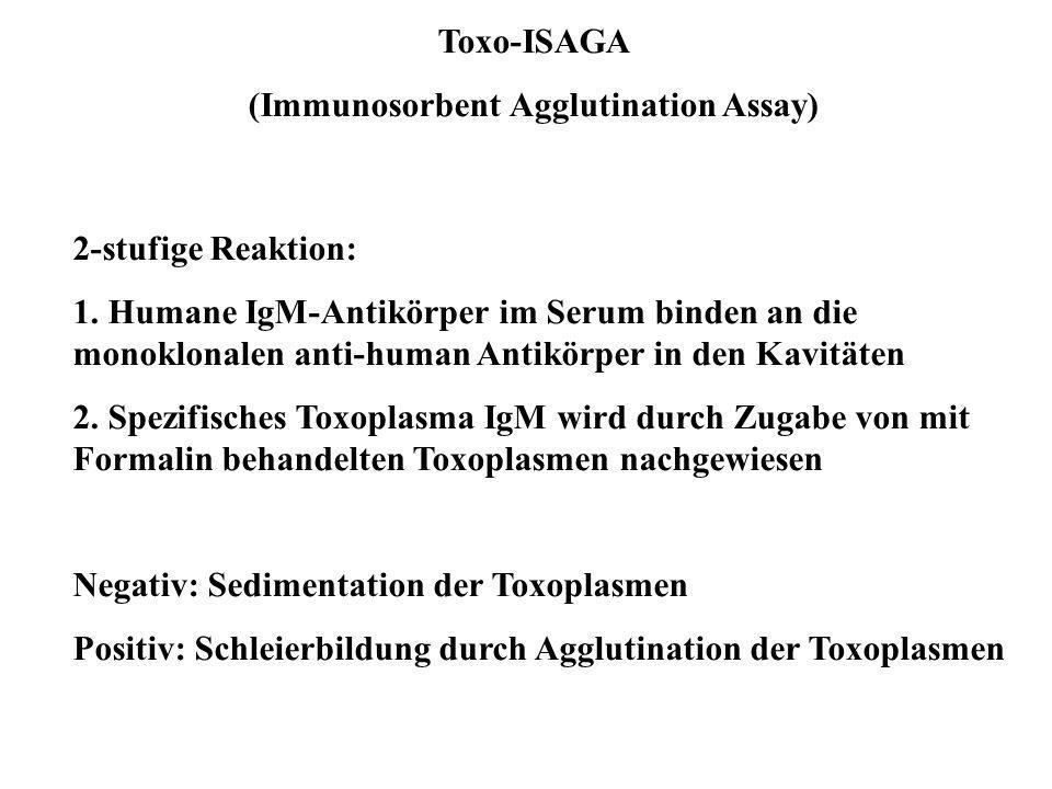 Toxo-ISAGA (Immunosorbent Agglutination Assay) 2-stufige Reaktion: 1. Humane IgM-Antikörper im Serum binden an die monoklonalen anti-human Antikörper