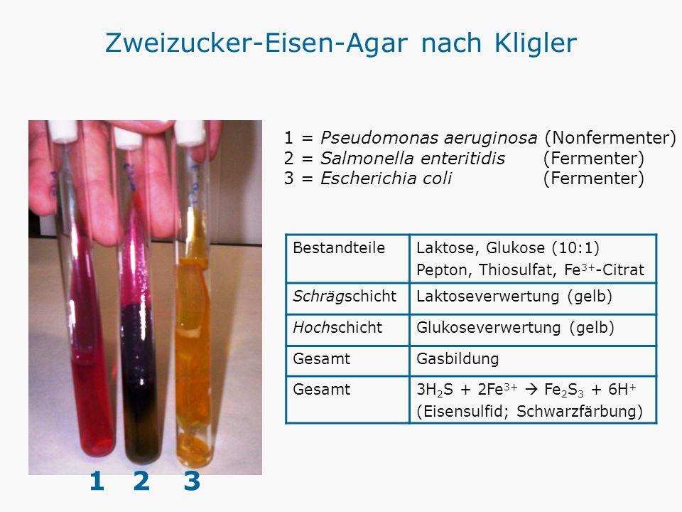 Zweizucker-Eisen-Agar nach Kligler BestandteileLaktose, Glukose (10:1) Pepton, Thiosulfat, Fe 3+ -Citrat SchrägschichtLaktoseverwertung (gelb) Hochsch