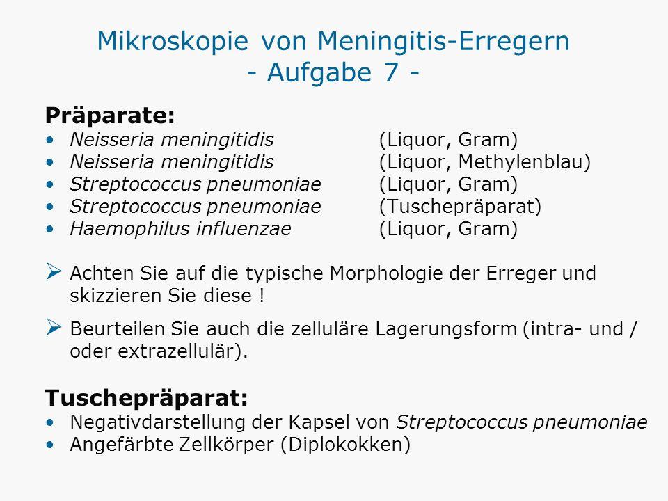 Mikroskopie von Meningitis-Erregern - Aufgabe 7 - Präparate: Neisseria meningitidis (Liquor, Gram) Neisseria meningitidis (Liquor, Methylenblau) Strep
