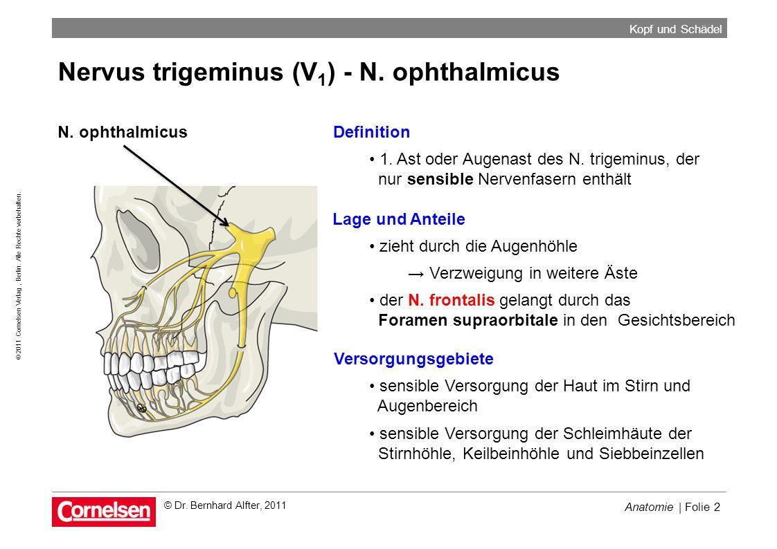 Anatomie | Folie 2 © 2011 Cornelsen Verlag, Berlin. Alle Rechte vorbehalten. Kopf und Schädel © Dr. Bernhard Alfter, 2011 Nervus trigeminus (V 1 ) - N
