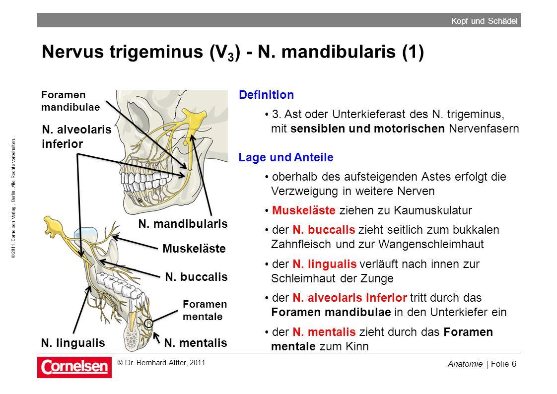 Anatomie | Folie 6 © 2011 Cornelsen Verlag, Berlin. Alle Rechte vorbehalten. Kopf und Schädel © Dr. Bernhard Alfter, 2011 Nervus trigeminus (V 3 ) - N