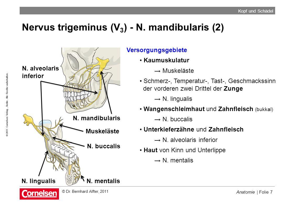 Anatomie | Folie 7 © 2011 Cornelsen Verlag, Berlin. Alle Rechte vorbehalten. Kopf und Schädel © Dr. Bernhard Alfter, 2011 Nervus trigeminus (V 3 ) - N