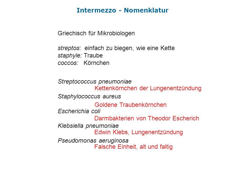Intermezzo - Nomenklatur Griechisch für Mikrobiologen streptos: einfach zu biegen, wie eine Kette staphyle: Traube coccos: Körnchen Streptococcus pneu
