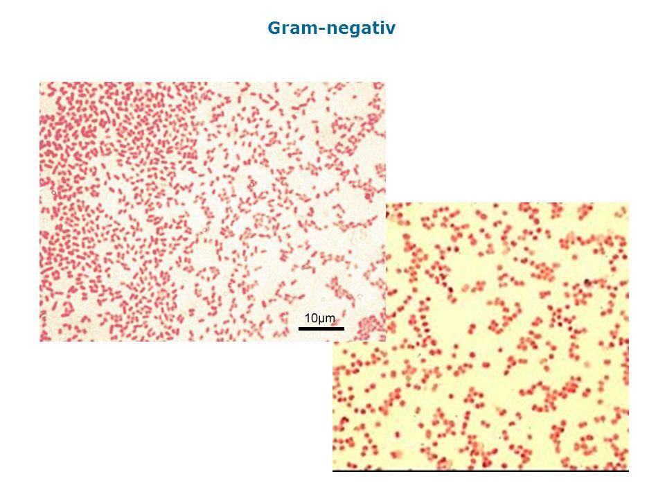 Gram-negativ