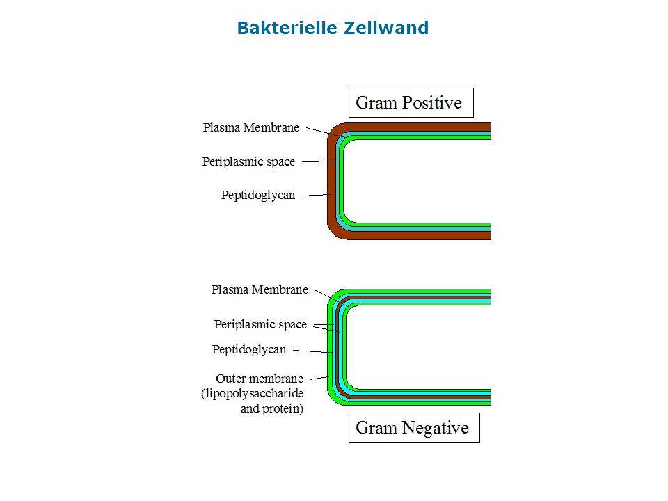 Bakterielle Erreger