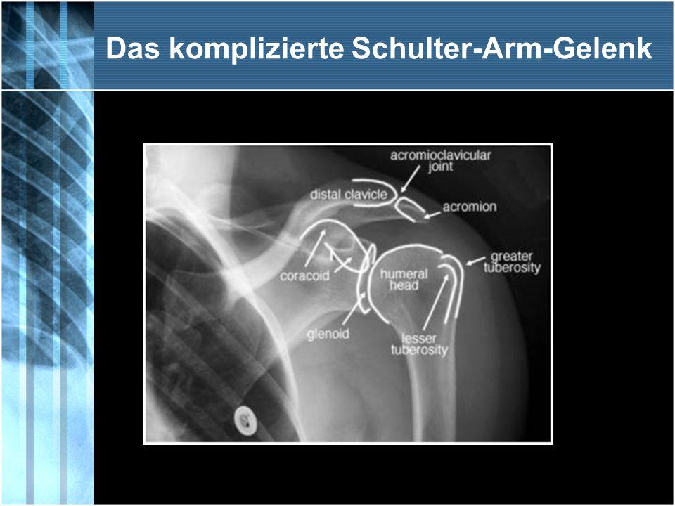 Schulter - Arm - Syndrom Es sieht sehr kompliziert aus, das anatomische Bild unseres Schultergürtels.