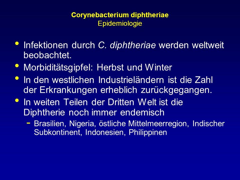 Corynebacterium diphtheriae Epidemiologie Infektionen durch C. diphtheriae werden weltweit beobachtet. Morbiditätsgipfel: Herbst und Winter In den wes