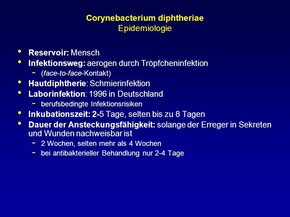 Corynebacterium diphtheriae Epidemiologie Reservoir: Mensch Infektionsweg: aerogen durch Tröpfcheninfektion - (face-to-face-Kontakt) Hautdiphtherie: S