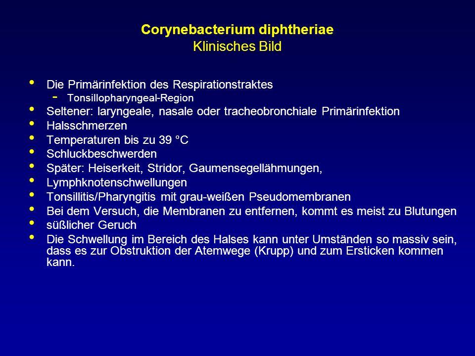 Corynebacterium diphtheriae Klinisches Bild Die Primärinfektion des Respirationstraktes - Tonsillopharyngeal-Region Seltener: laryngeale, nasale oder