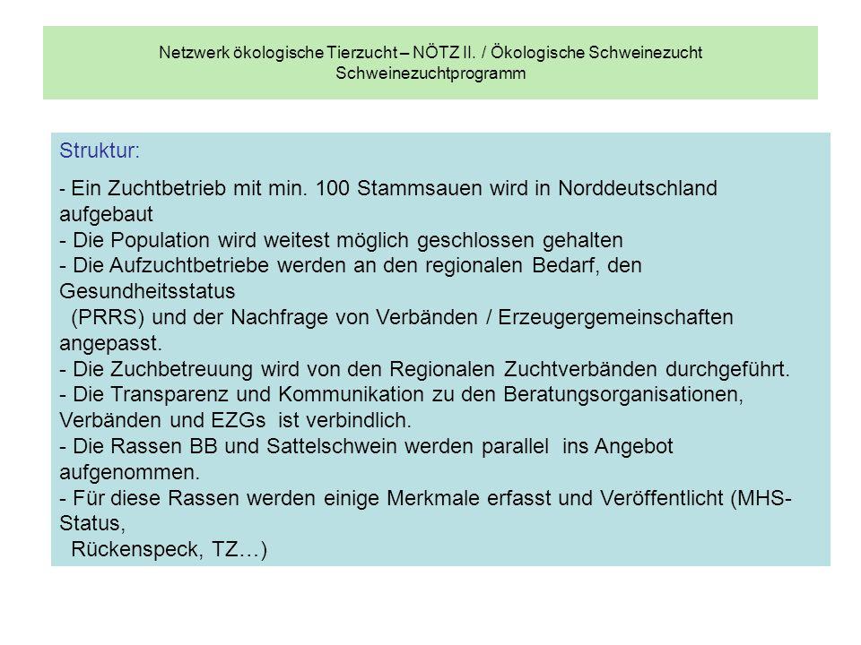 Netzwerk ökologische Tierzucht – NÖTZ II. / Ökologische Schweinezucht Schweinezuchtprogramm Struktur: - Ein Zuchtbetrieb mit min. 100 Stammsauen wird