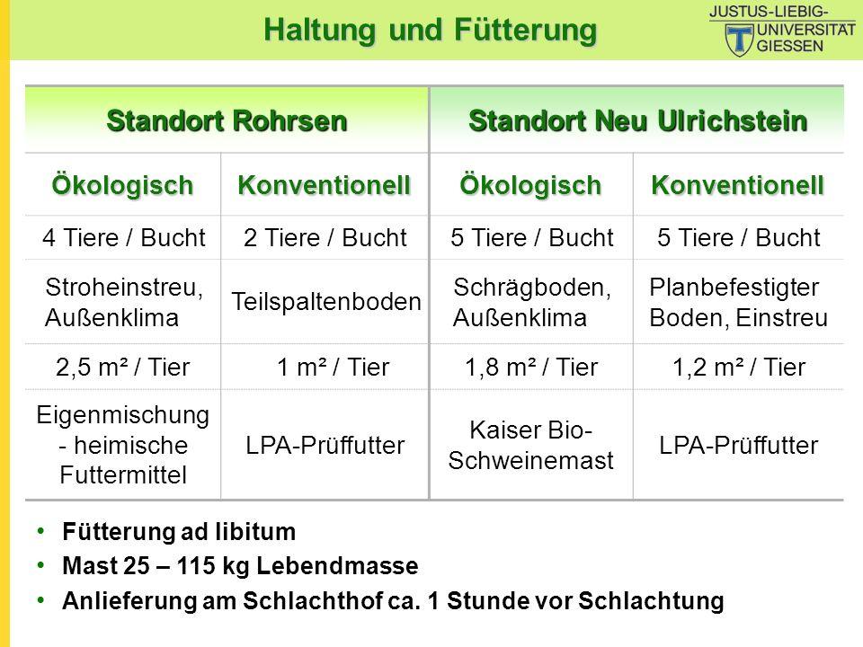 Haltung und Fütterung Standort Rohrsen Standort Neu Ulrichstein ÖkologischKonventionellÖkologischKonventionell 4 Tiere / Bucht2 Tiere / Bucht5 Tiere /