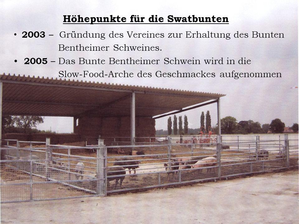 Höhepunkte für die Swatbunten 2003 – Gründung des Vereines zur Erhaltung des Bunten Bentheimer Schweines. 2005 – Das Bunte Bentheimer Schwein wird in
