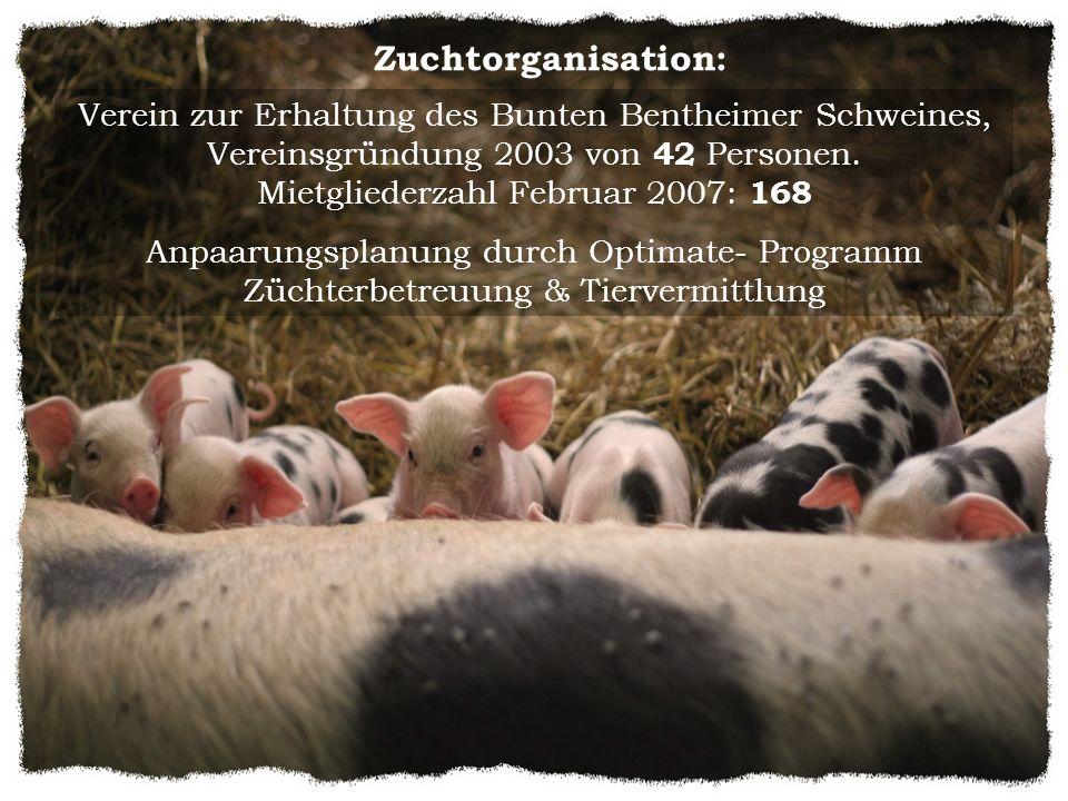 Zuchtorganisation: Verein zur Erhaltung des Bunten Bentheimer Schweines, Vereinsgründung 2003 von 42 Personen. Mietgliederzahl Februar 2007: 168 Anpaa