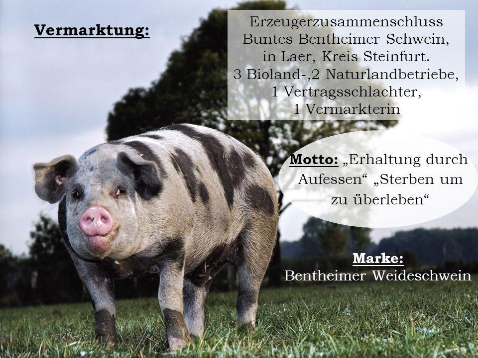 Vermarktung: Erzeugerzusammenschluss Buntes Bentheimer Schwein, in Laer, Kreis Steinfurt. 3 Bioland-,2 Naturlandbetriebe, 1 Vertragsschlachter, 1 Verm