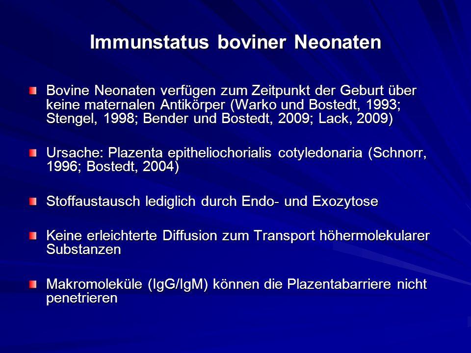 Immunstatus boviner Neonaten Bovine Neonaten verfügen zum Zeitpunkt der Geburt über keine maternalen Antikörper (Warko und Bostedt, 1993; Stengel, 199
