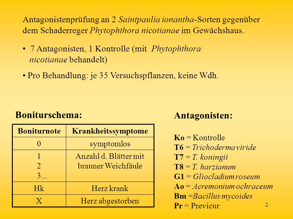 2 Herz krankHk Herz abgestorbenX Anzahl d. Blätter mit brauner Weichfäule 1 2 3... symptomlos0 KrankheitssymptomeBoniturnote Boniturschema: Antagonist