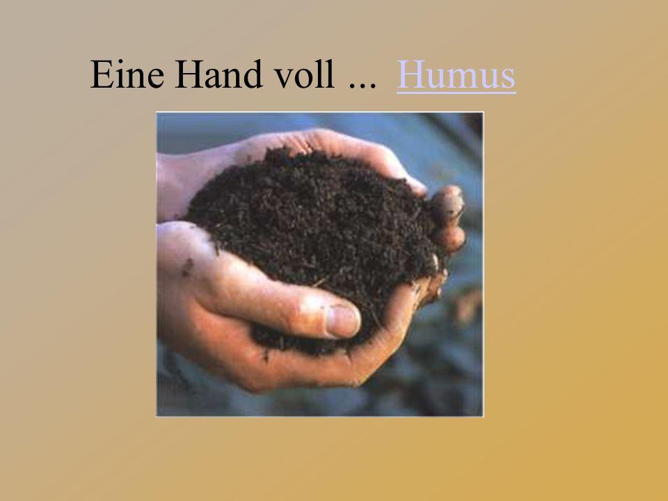 Eine Hand voll... Humus