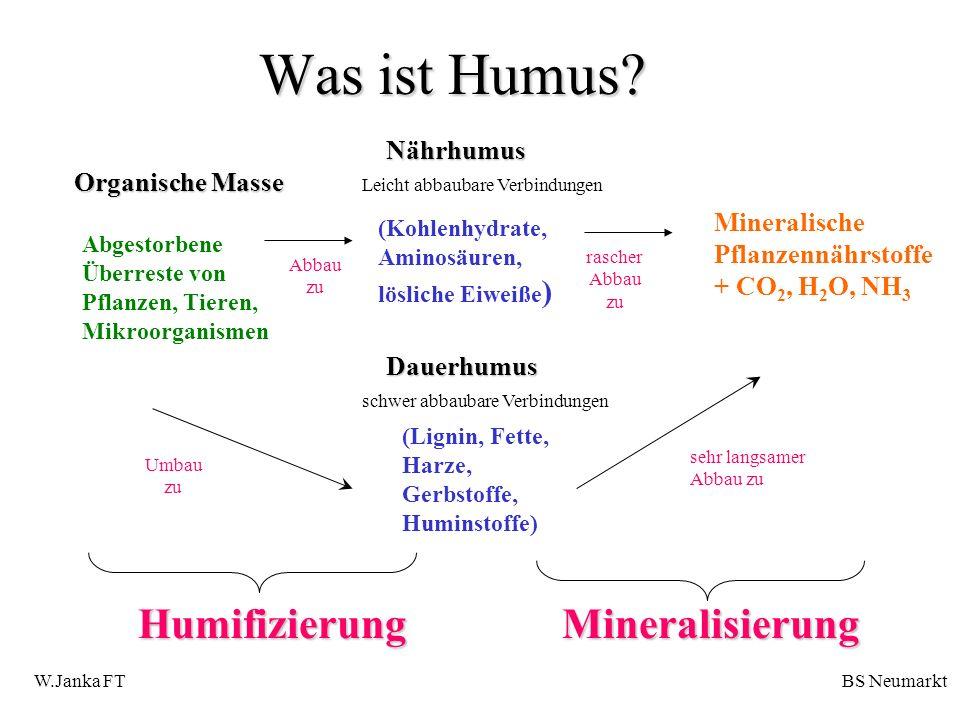 Was ist Humus? (Kohlenhydrate, Aminosäuren, lösliche Eiweiße ) (Lignin, Fette, Harze, Gerbstoffe, Huminstoffe) Organische Masse Nährhumus Dauerhumus A