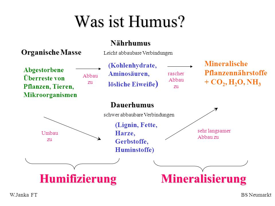 Was ist Humus? Abgestorbene Überreste von Pflanzen, Tieren, Mikroorganismen (Kohlenhydrate, Aminosäuren, lösliche Eiweiße ) (Lignin, Fette, Harze, Ger