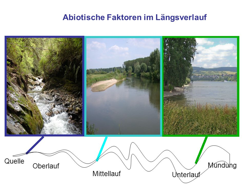 Gefälle Abiotische Faktoren im Längsverlauf Fließgeschwindigkeit Korngröße OBERLAUFMITTELLAUF UNTERLAUF Quelle Mündung Oberlauf Mittellauf Unterlauf Abiotische Faktoren im Längsverlauf