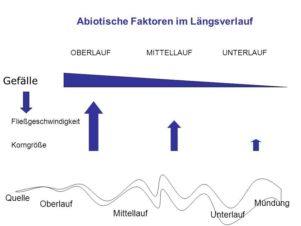 Gefälle Abiotische Faktoren im Längsverlauf Fließgeschwindigkeit Korngröße OBERLAUFMITTELLAUF UNTERLAUF Quelle Mündung Oberlauf Mittellauf Unterlauf A