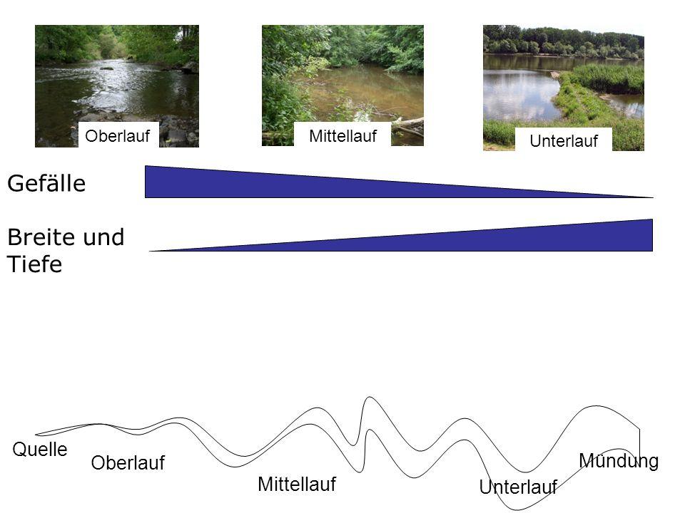 Gefälle Belichtung Abiotische Faktoren im Längsverlauf Quelle Mündung Oberlauf Mittellauf Unterlauf OberlaufMittellauf Unterlauf Breite und Tiefe