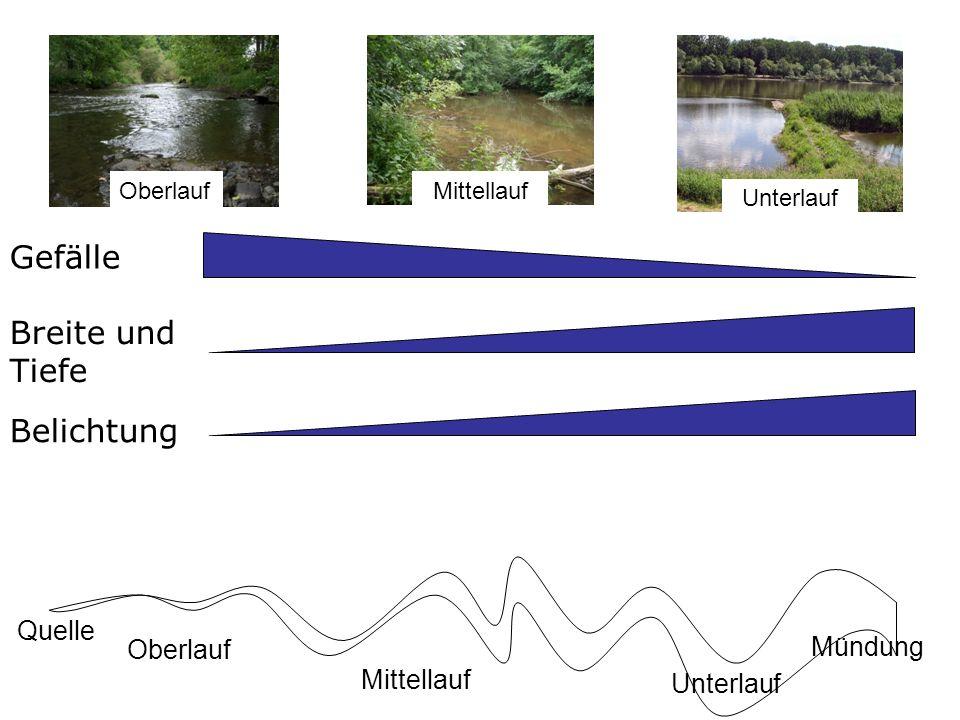 Gefälle Trübung Belichtung Breite und Tiefe Abiotische Faktoren im Längsverlauf Quelle Mündung Oberlauf Mittellauf Unterlauf OberlaufMittellaufUnterlauf