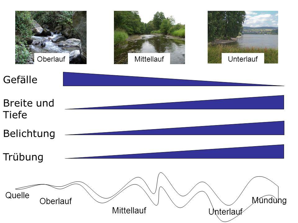 Gefälle Trübung Belichtung Breite und Tiefe Abiotische Faktoren im Längsverlauf Quelle Mündung Oberlauf Mittellauf Unterlauf OberlaufMittellaufUnterla
