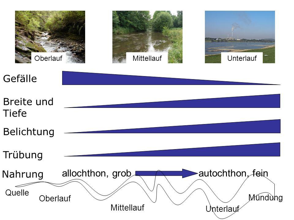 Gefälle Trübung Belichtung Breite und Tiefe Nahrung allochthon, grob autochthon, fein Umweltfaktoren im Längsverlauf Oberlauf Mittellauf Quelle Mündun