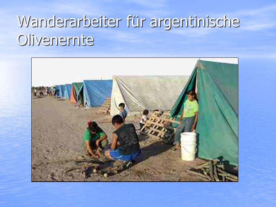 Wanderarbeiter für argentinische Olivenernte