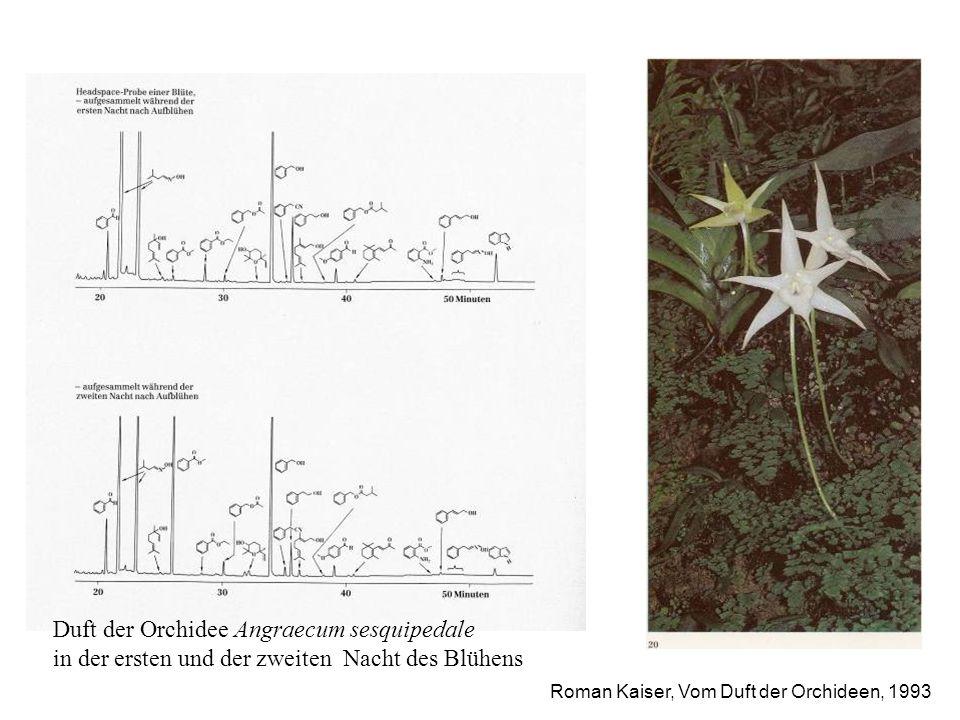 Roman Kaiser, Vom Duft der Orchideen, 1993 Natürliche Düfte sind Gemische, deren Zusammensetzung sich ändern kann Duft der Orchidee Angraecum sesquipe