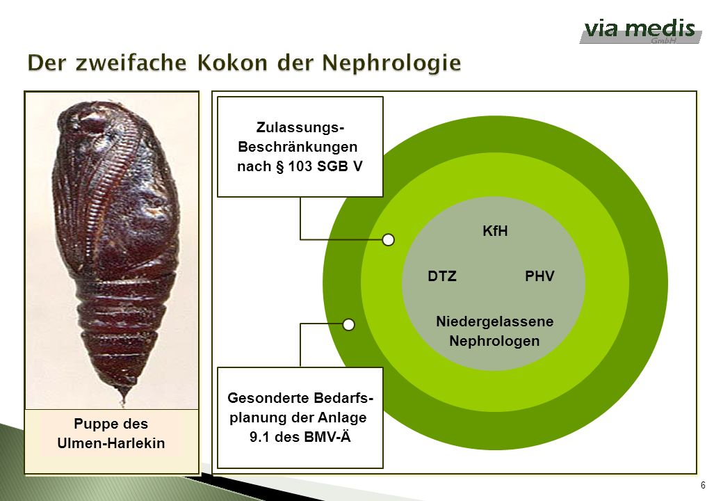 6 Puppe des Ulmen-Harlekin KfH Niedergelassene Nephrologen PHVDTZ Zulassungs- Beschränkungen nach § 103 SGB V Gesonderte Bedarfs- planung der Anlage 9