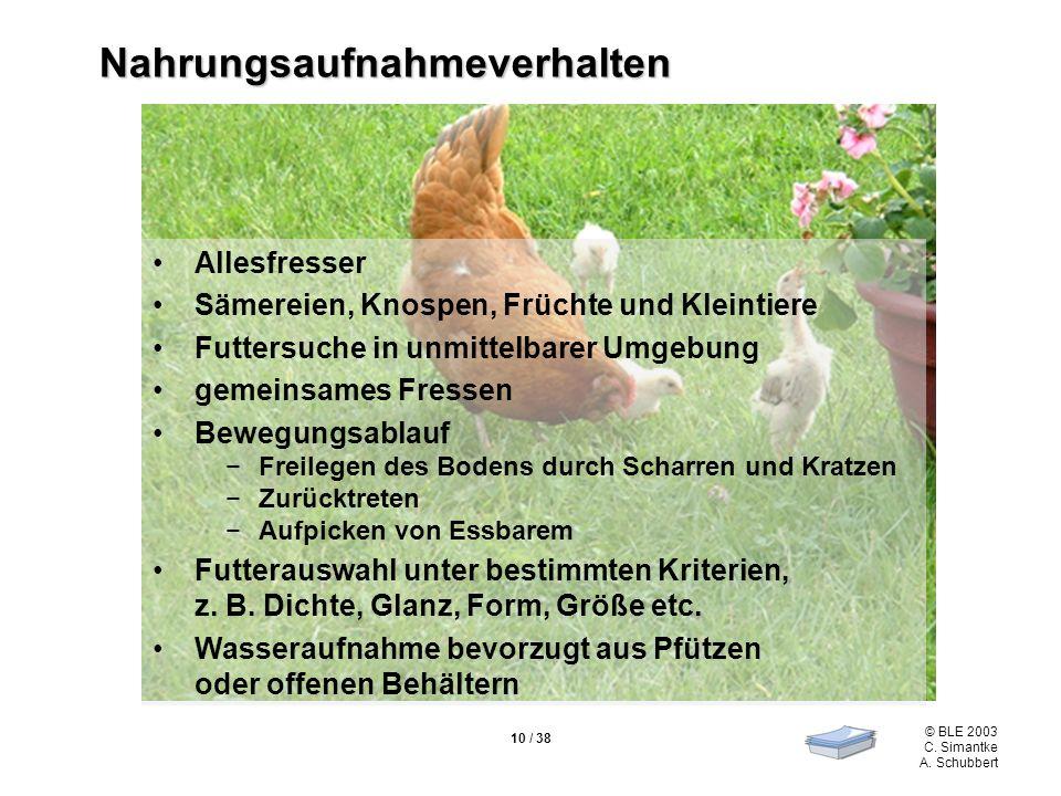 © BLE 2003 C. Simantke A. Schubbert 10 / 38 Allesfresser Sämereien, Knospen, Früchte und Kleintiere Futtersuche in unmittelbarer Umgebung gemeinsames