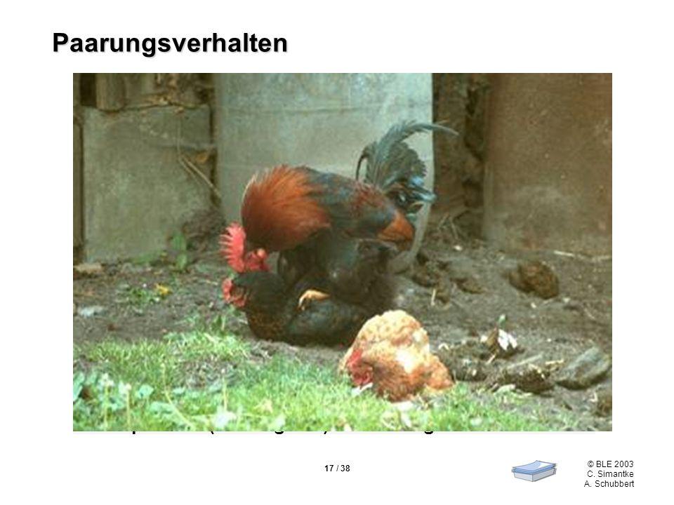 © BLE 2003 C. Simantke A. Schubbert 17 / 38 polygame Lebensweise Balzformen –Annäherung von hinten –Locken –Walzern (Stolpern über den Flügel) –Rufen