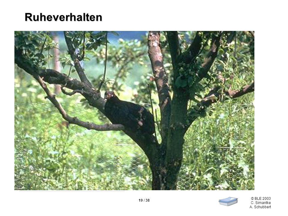 © BLE 2003 C. Simantke A. Schubbert 19 / 38 Ruhen im Stehen oder Liegen Schlafen auf erhöhten Plätzen Ruheverhalten