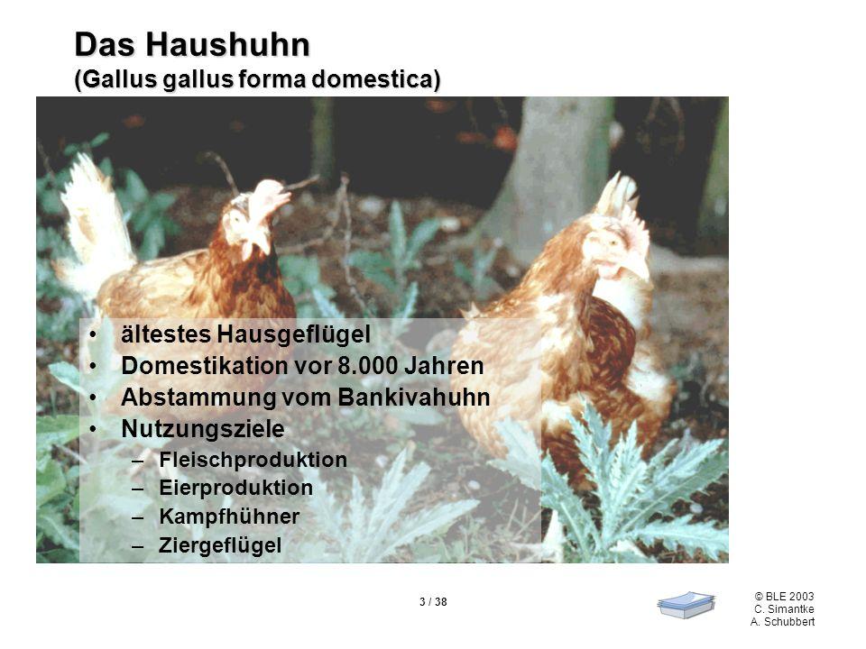 © BLE 2003 C. Simantke A. Schubbert 3 / 38 Das Haushuhn (Gallus gallus forma domestica) ältestes Hausgeflügel Domestikation vor 8.000 Jahren Abstammun