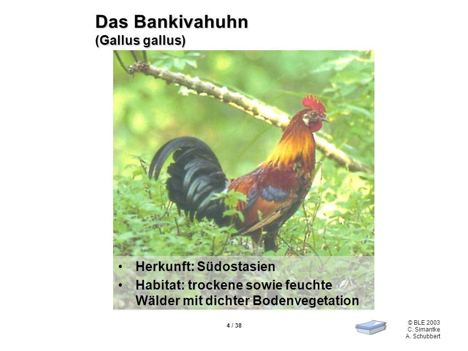© BLE 2003 C. Simantke A. Schubbert 4 / 38 Das Bankivahuhn (Gallus gallus) Herkunft: Südostasien Habitat: trockene sowie feuchte Wälder mit dichter Bo