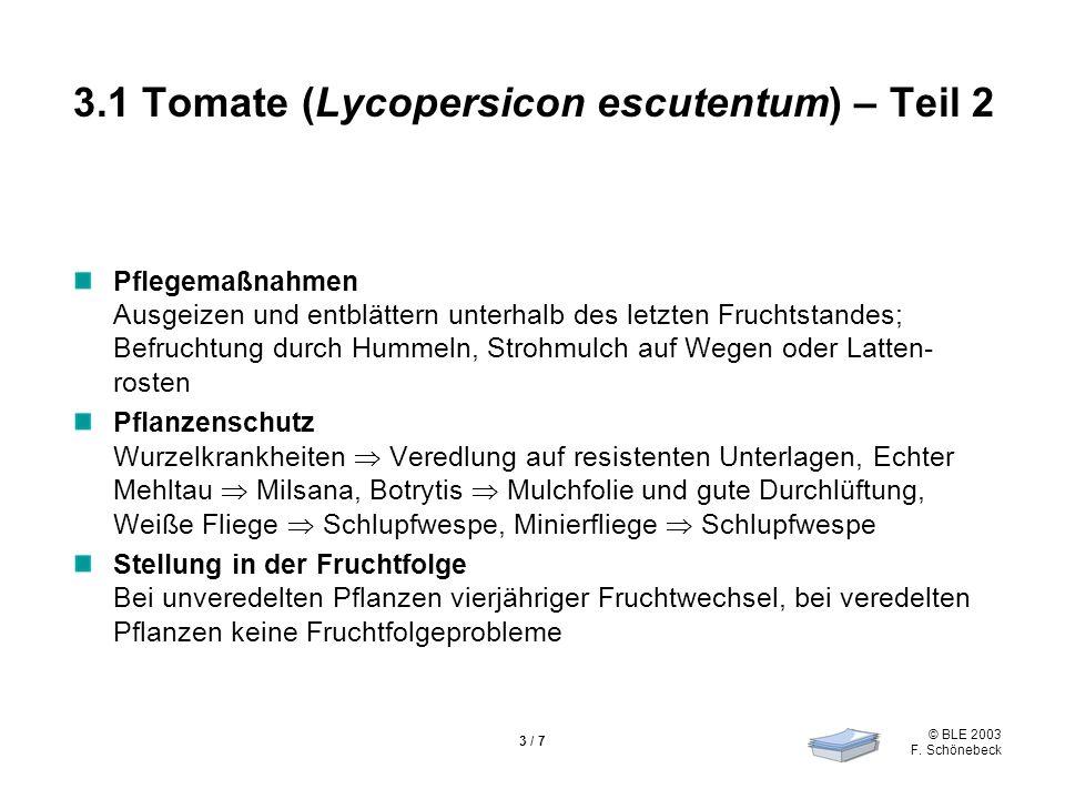 © BLE 2003 F. Schönebeck 3 / 7 3.1 Tomate (Lycopersicon escutentum) – Teil 2 Pflegemaßnahmen Ausgeizen und entblättern unterhalb des letzten Fruchtsta