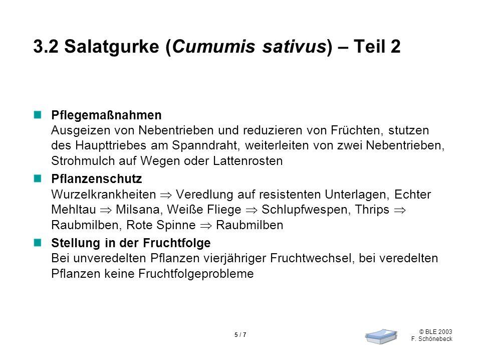 © BLE 2003 F. Schönebeck 5 / 7 3.2 Salatgurke (Cumumis sativus) – Teil 2 Pflegemaßnahmen Ausgeizen von Nebentrieben und reduzieren von Früchten, stutz