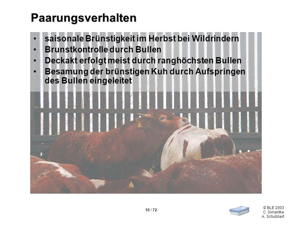 10 / 72 © BLE 2003 C. Simantke A. Schubbert Paarungsverhalten saisonale Brünstigkeit im Herbst bei Wildrindern Brunstkontrolle durch Bullen Deckakt er