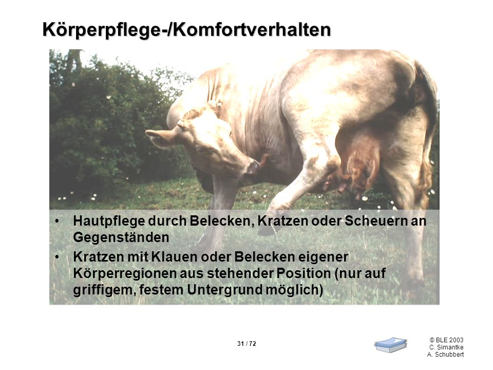 31 / 72 © BLE 2003 C. Simantke A. Schubbert Körperpflege-/Komfortverhalten Hautpflege durch Belecken, Kratzen oder Scheuern an Gegenständen Kratzen mi