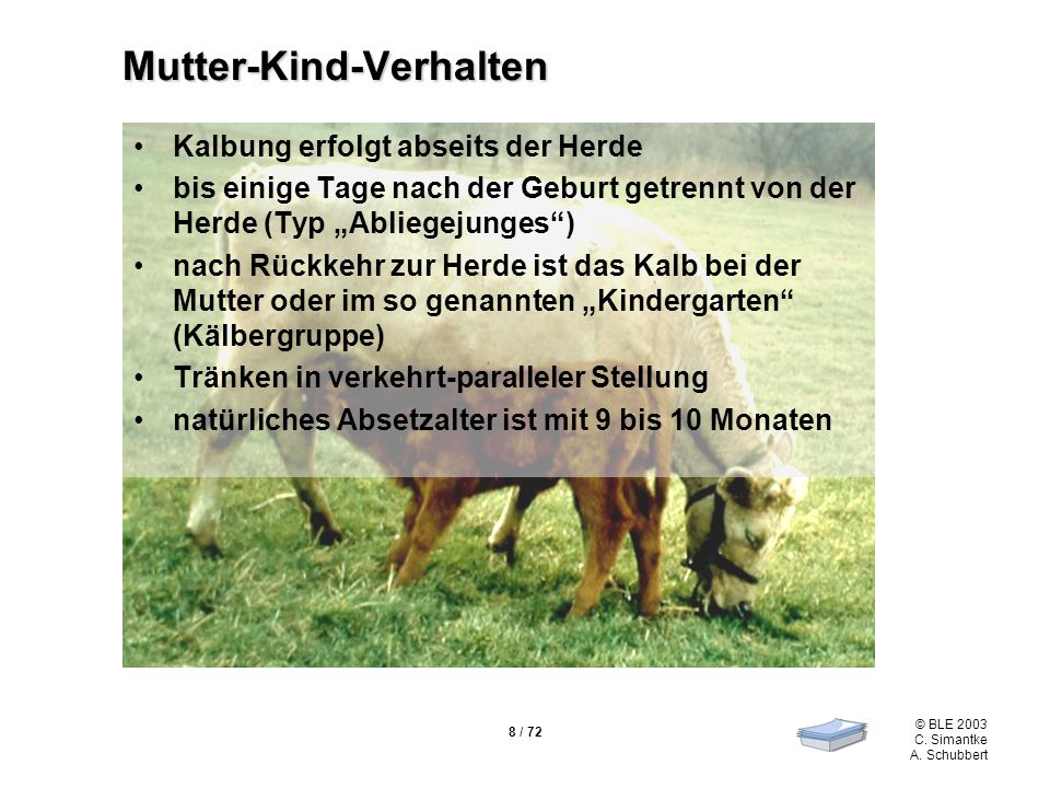 8 / 72 © BLE 2003 C. Simantke A. Schubbert Mutter-Kind-Verhalten Kalbung erfolgt abseits der Herde bis einige Tage nach der Geburt getrennt von der He