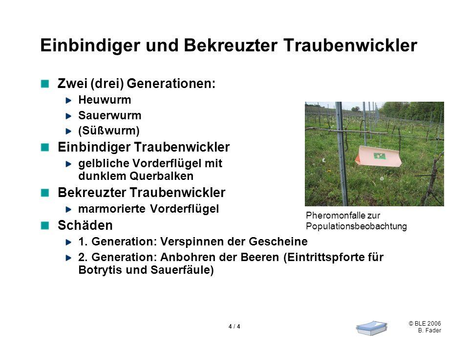 © BLE 2006 B. Fader 4 / 4 Einbindiger und Bekreuzter Traubenwickler Zwei (drei) Generationen: Heuwurm Sauerwurm (Süßwurm) Einbindiger Traubenwickler g
