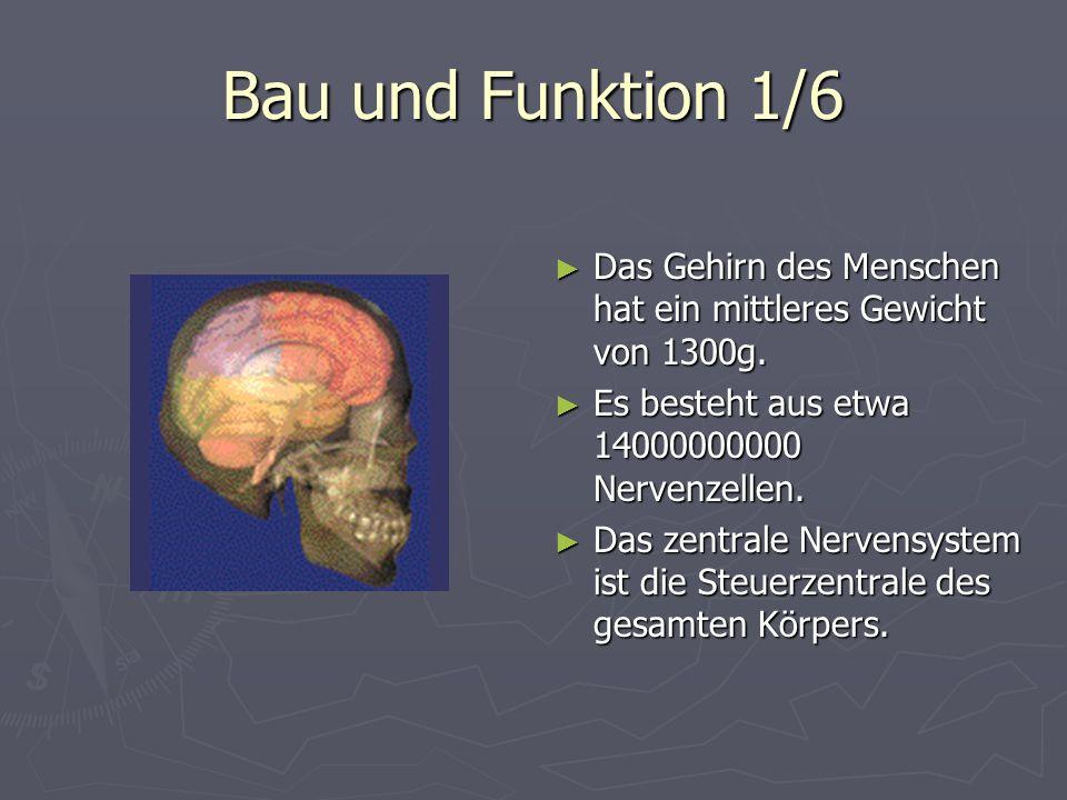 Bau und Funktion 1/6 Das Gehirn des Menschen hat ein mittleres Gewicht von 1300g. Es besteht aus etwa 14000000000 Nervenzellen. Das zentrale Nervensys