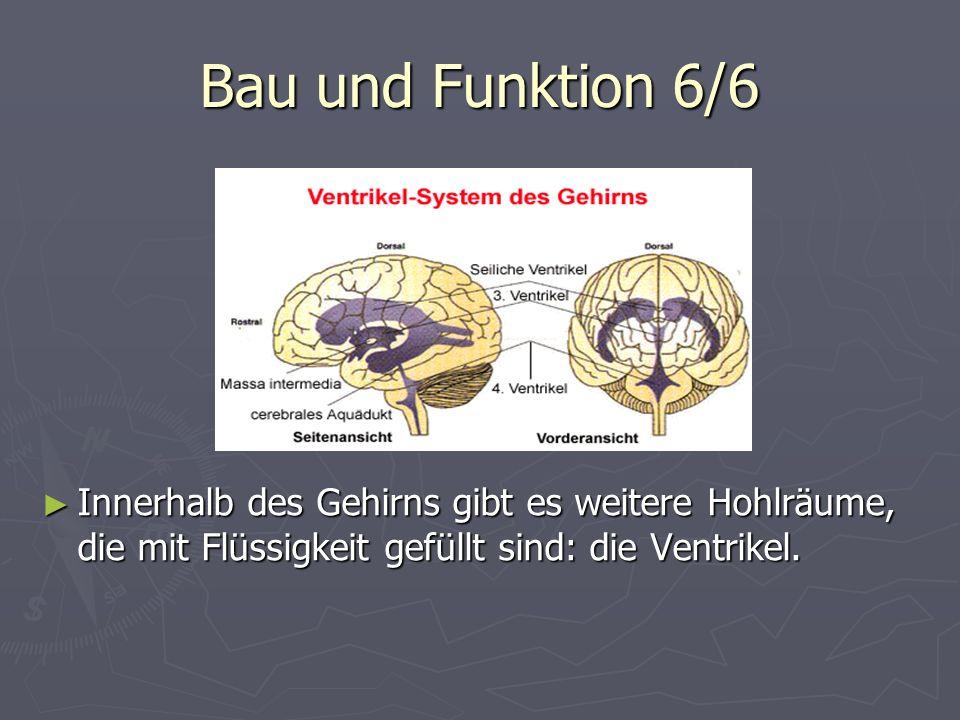 Bau und Funktion 6/6 Innerhalb des Gehirns gibt es weitere Hohlräume, die mit Flüssigkeit gefüllt sind: die Ventrikel.